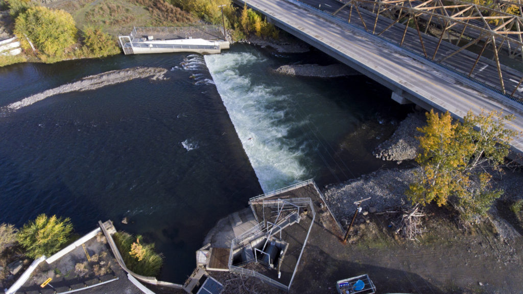 The Nelson Dam is an 8-foot-high diversion dam that sits just upstream of the city of Yakima on the Naches River in Washington. (Credit: Justin Clifton)